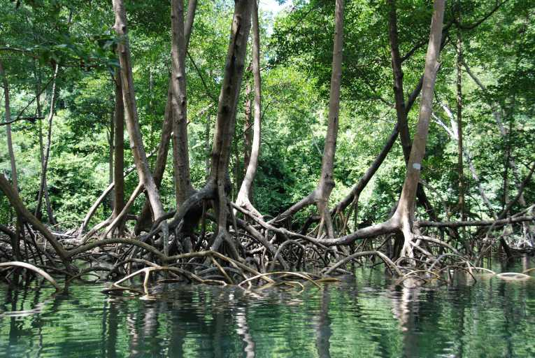 carbon-grasped-mangrove-roots-vastly-underestimated_54